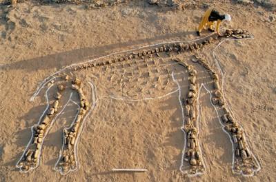 À la recherche des Dinosaures : du terrain au laboratoire