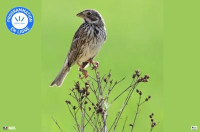 La baisse catastrophique des populations d'oiseaux continue