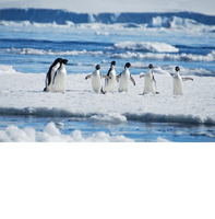 Temps fort Science : Antarctique, Conditions extrêmes et Sciences uniques
